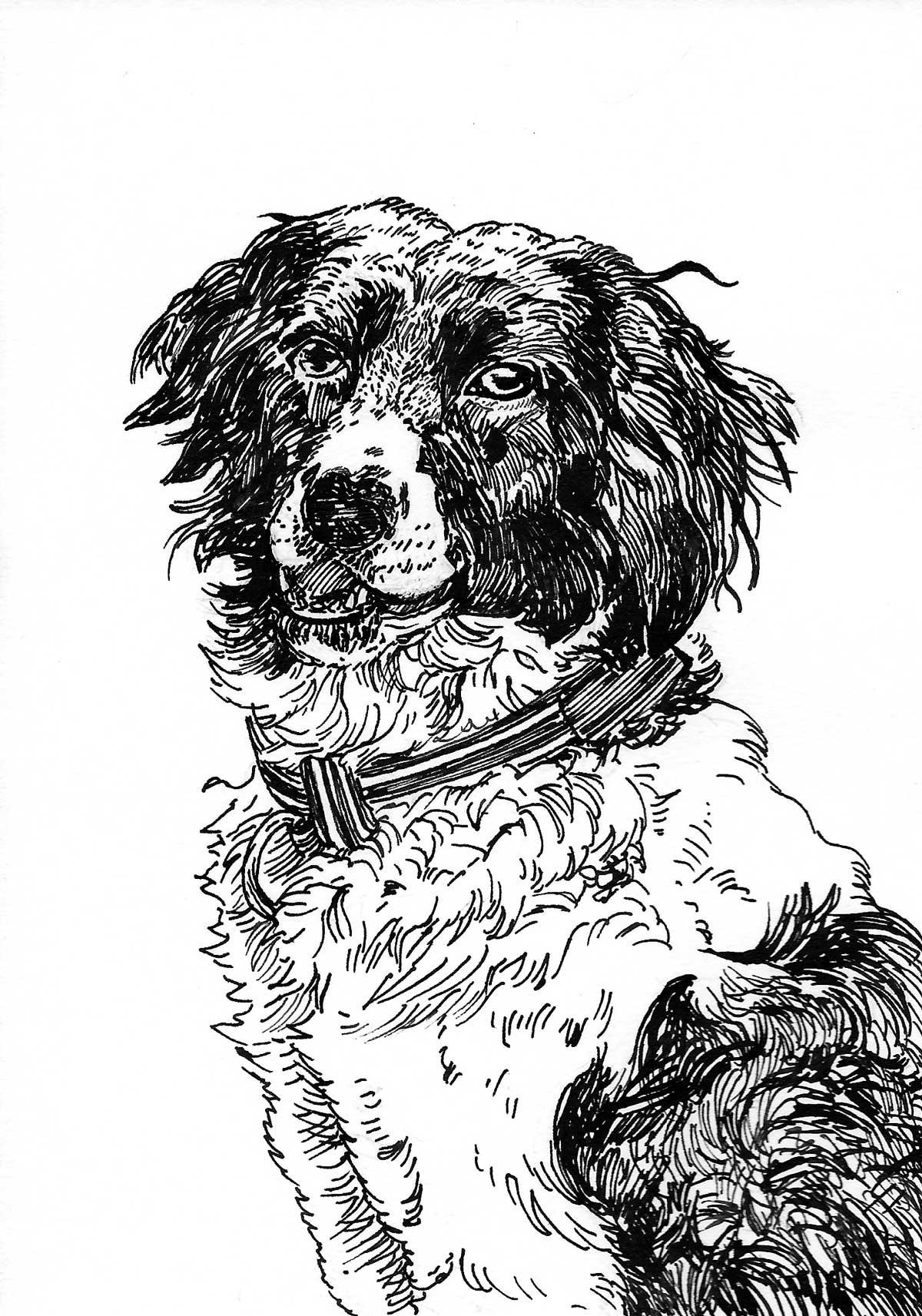 KS-Dog-Art