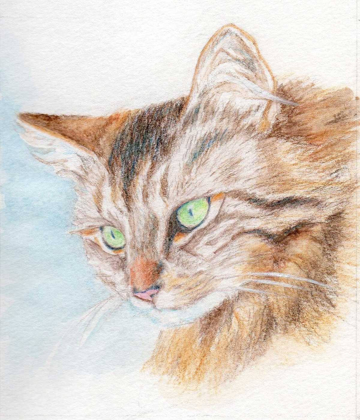 Kitten-Art