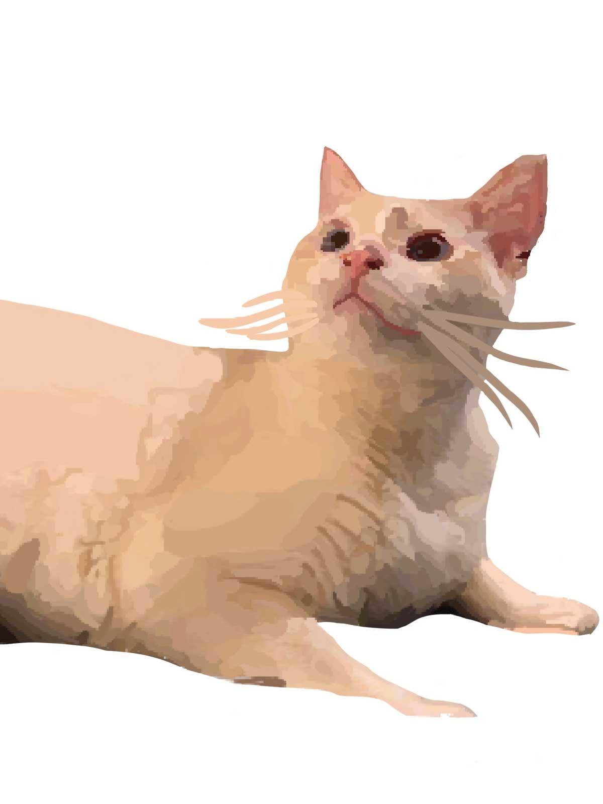 LB-Cat-Art