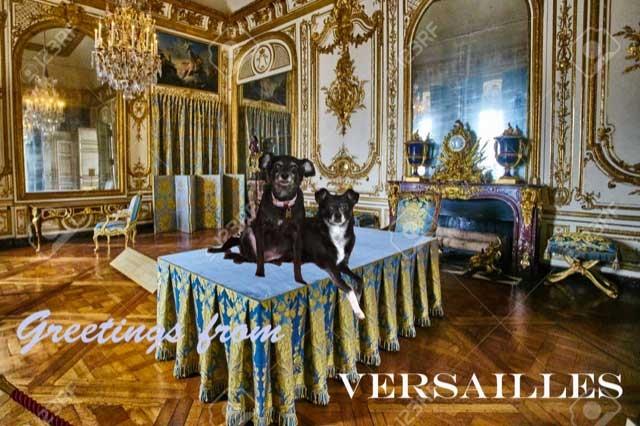 LE-Dogs2-Art