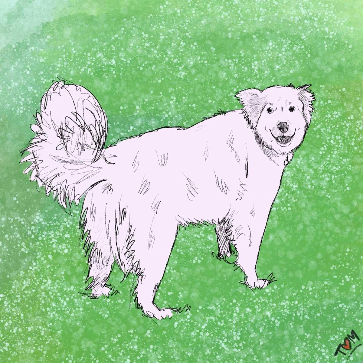 MT-Dog-Art