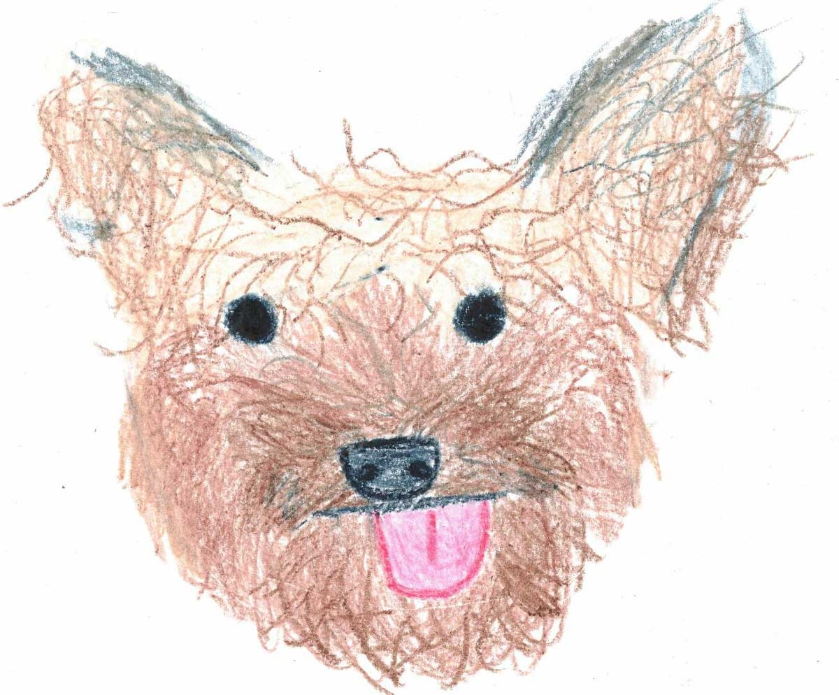 Yorkie-Face-Art
